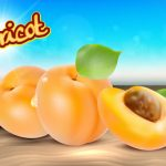 Realistic Apricot Vector Fruit Illustration