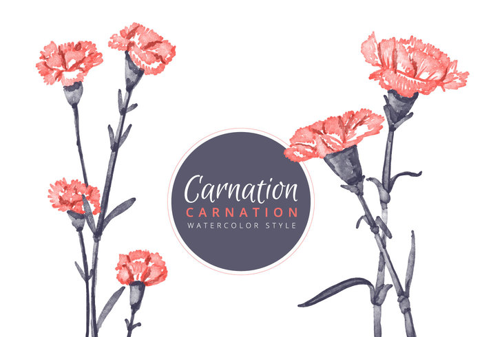 Watercolour Carnation Flowers